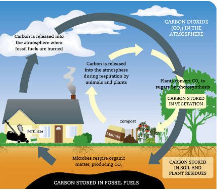 Sustainable urban gardens the blog the climate for 0 4 soil carbon