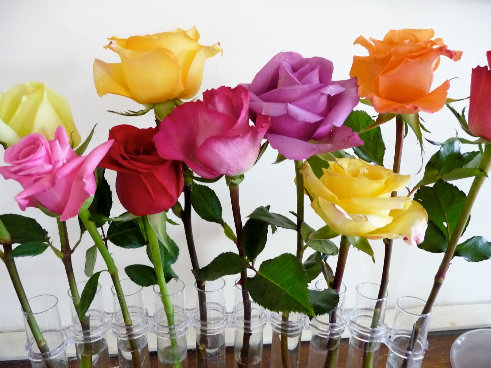 Dinner party an indoor flower garden wednesday april 7 2010 workwithnaturefo