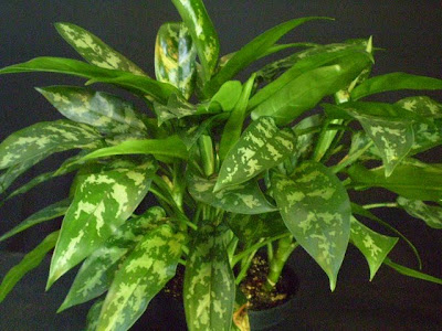 Plants are the Strangest People: List: Houseplants That ...