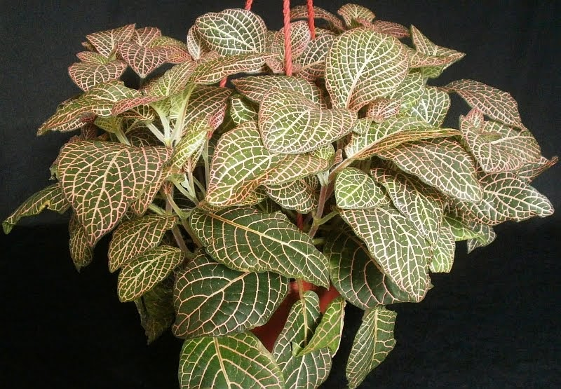 Plants are the strangest people new plants for How to take care of exotic angel plants
