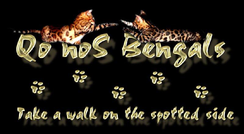 QonoS Bengalkatzen