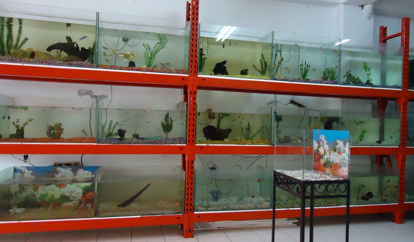 Acuario montelibano la casa del acuario for Acuarios ornamentales