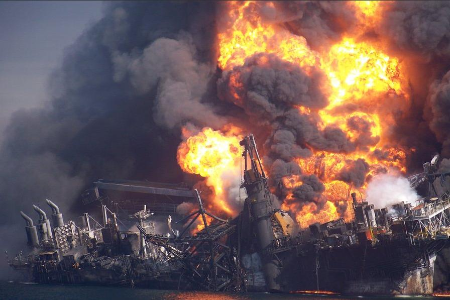 study shows bp oil spill to blame for heart defects in fish