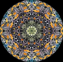 THE MYSTERIOUS MANDALA