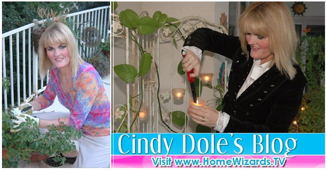 Cindy Dole Home Improvement Ideas and Answers