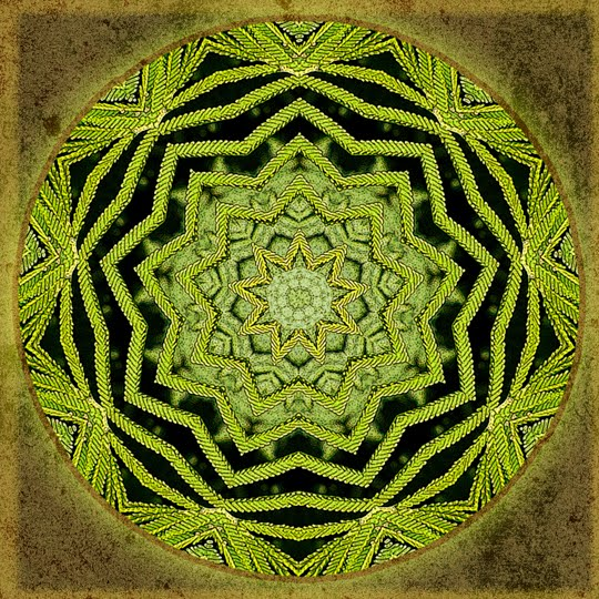 redwood healing mandala