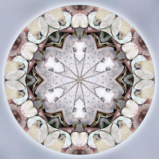 autumn mystic mandala