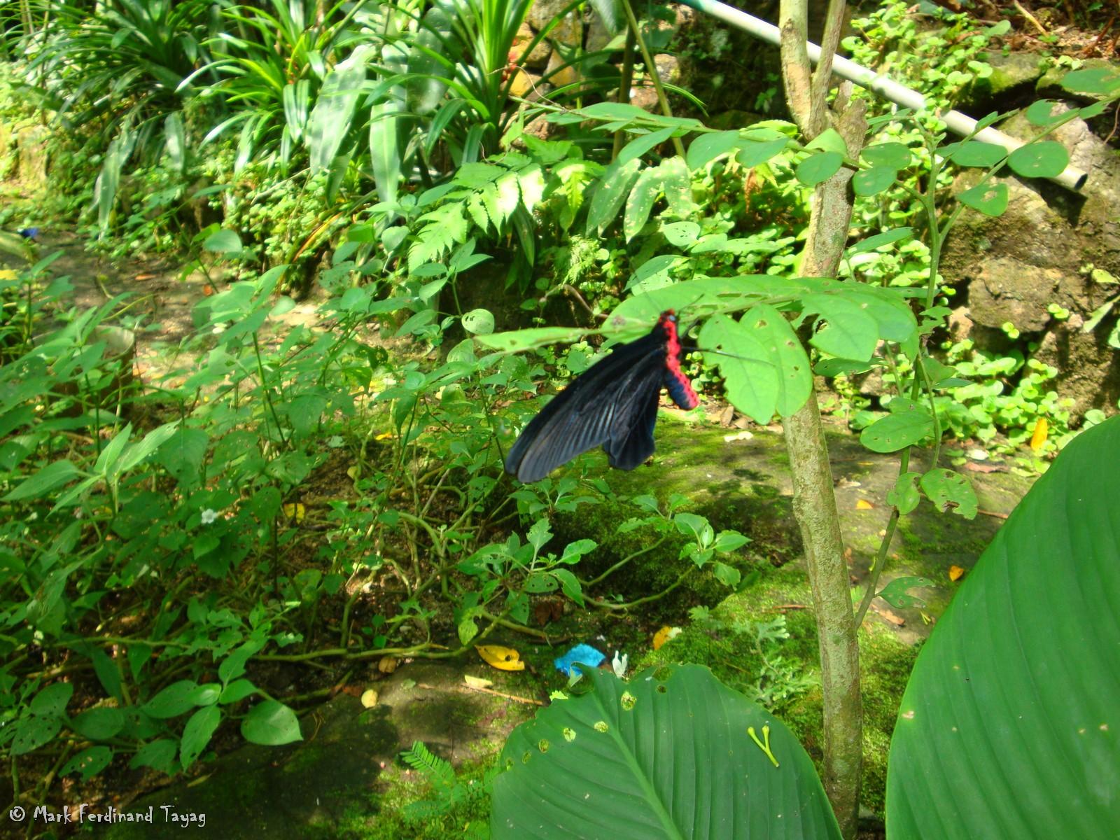 Butterfly Park - Kuala...