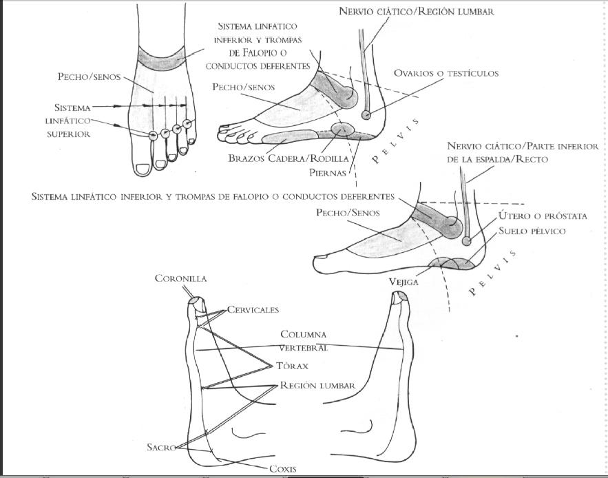 SER ALEGRE: Reflexologia: Ubicación de reflejos en manos y pies ...