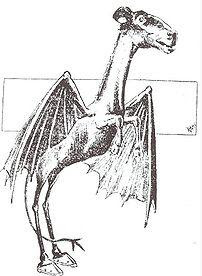 Artist's rendition of the New Jersey Devil