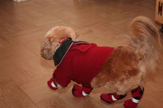 [Louie+walking+in+shoes]