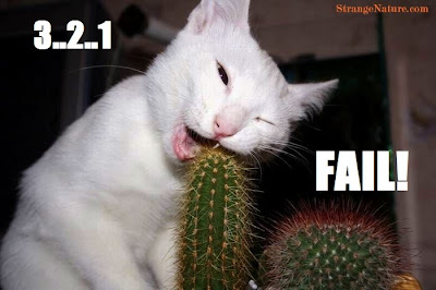 funny-cat-fail-picture.jpg