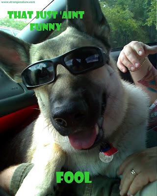 dog quotes funny. funny dog quotes. funny