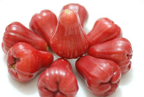 Asal usul pohon buah ini tidak diketahui dengan pasti, namun