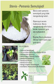 Flyer Stevia Empire