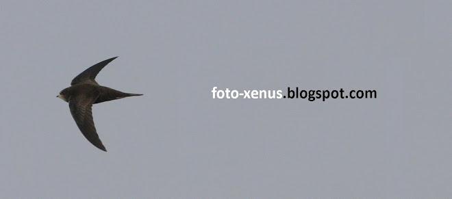 Foto Xenus