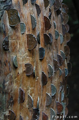 Money Tree,This is a random  picture of a money tree. They can be found throughout the world. If you are  lucky enough to come across one, grab a seed.