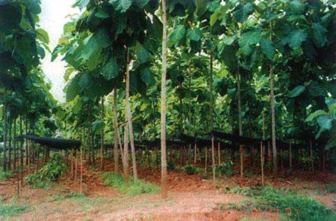Peluang Investasi Usaha Agro Bisnis Pohon Jati yang Menguntungkan Menjanjikan di Tahun