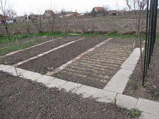 Homokos komposzttal fedett zöldségvetés.