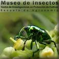 MUSEO DE INSECTOS