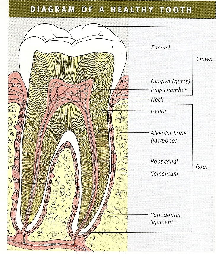 Root Canal Treatment Steps Root Canal Treatment