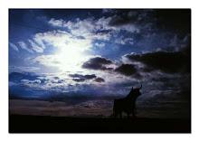 toro en el horizonte