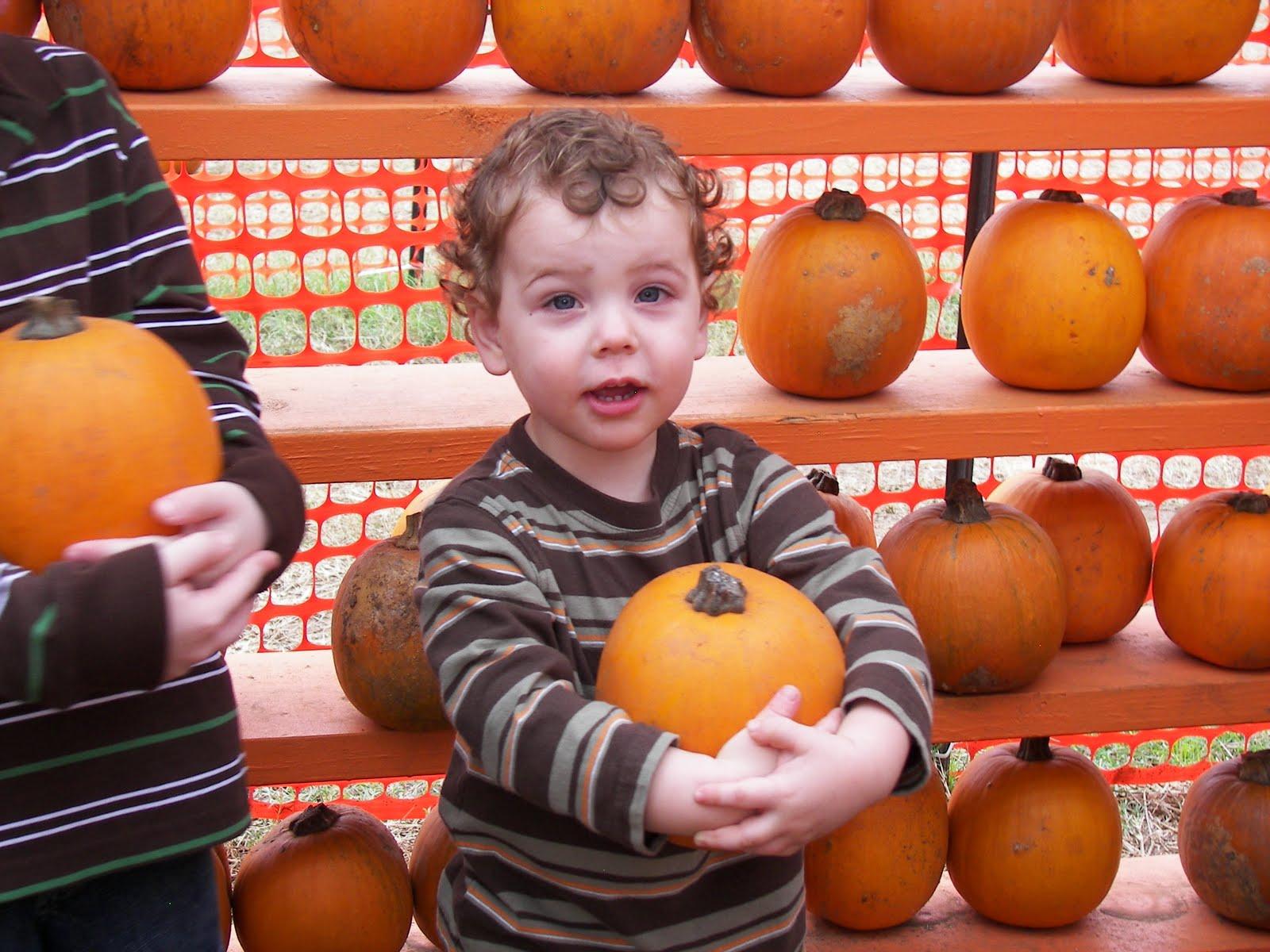 [Pumpkin+Patch+2009+027.JPG]