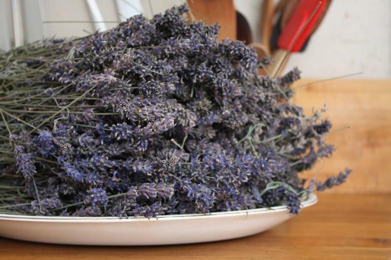 Backstitch Free Lavender Embroidery Transfer