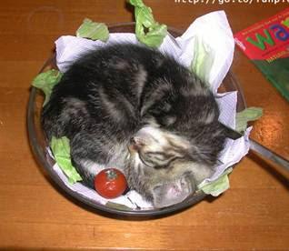 http://2.bp.blogspot.com/_ewQuGGy0QbI/S3t4bI9wVhI/AAAAAAAABAk/MUmzr-WvSVQ/s320/cat_on_a_plate.jpg