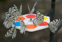 Paper Kite Butterflies