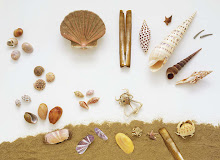 Shell scene