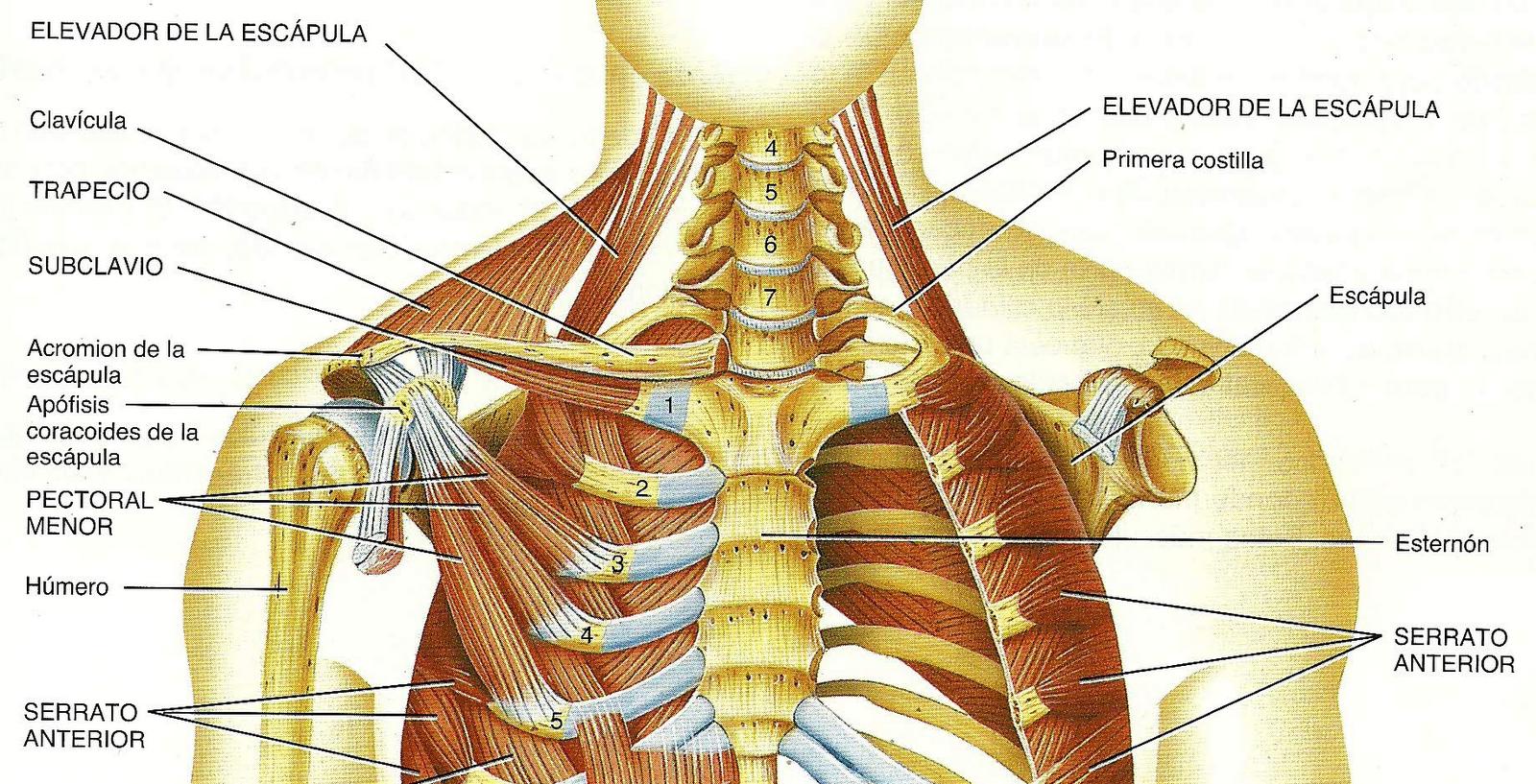 Anatomia: septiembre 2010