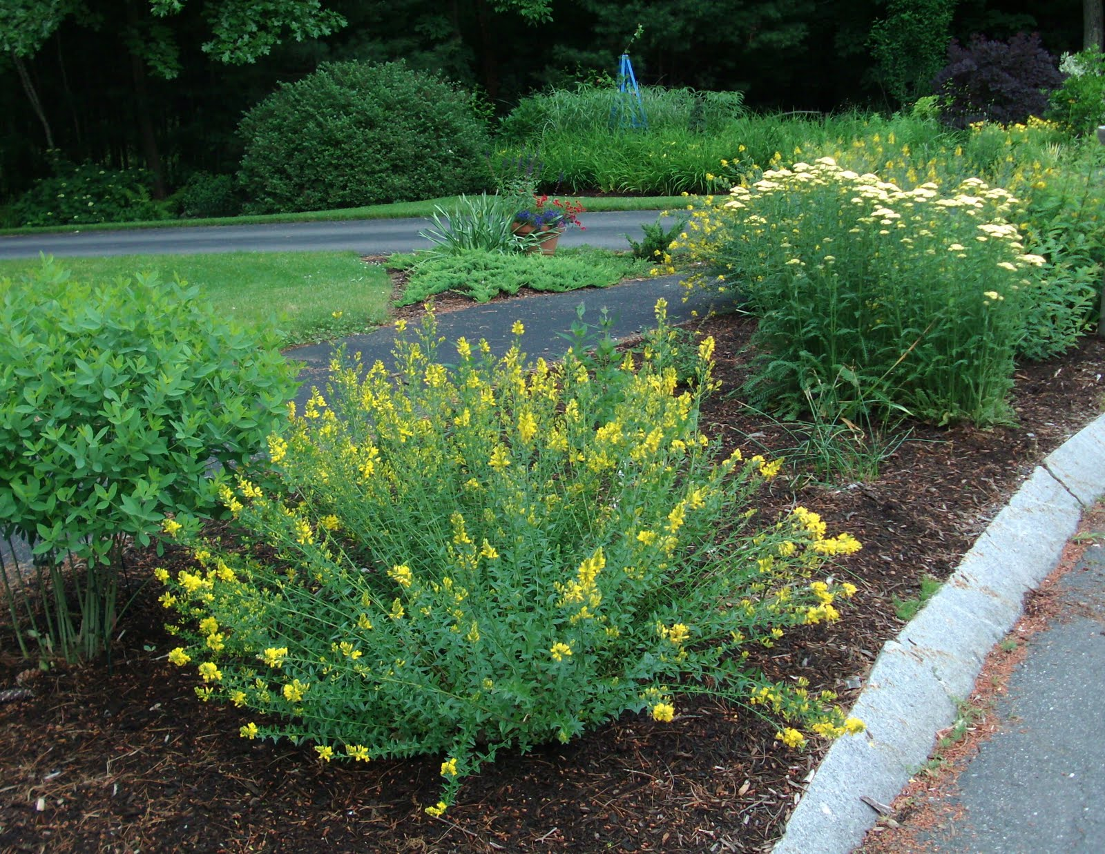 The Xeric Garden Hits Its Stride