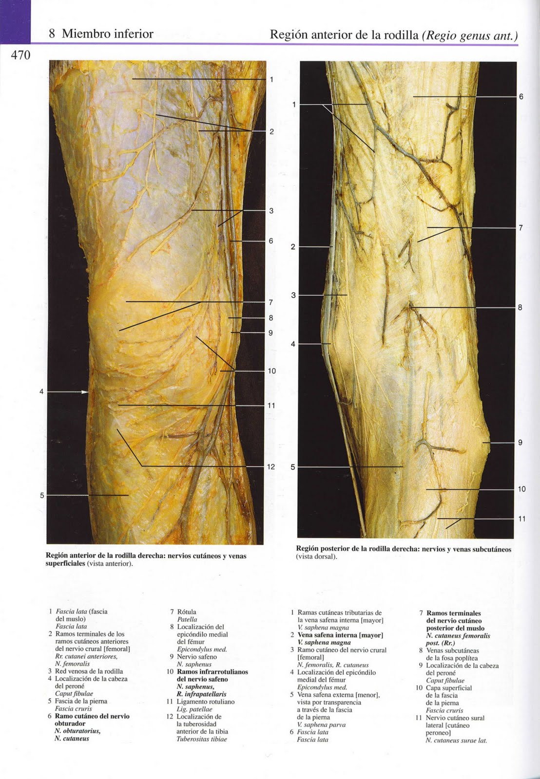Moderno Anatomía Muslo Medial Ornamento - Imágenes de Anatomía ...