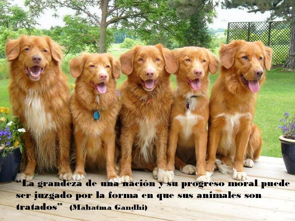 http://2.bp.blogspot.com/_ezCKSSmSIOY/S9l59Ym90MI/AAAAAAAABBg/wNgLRh9F7LM/s1600/Perros+26.bmp