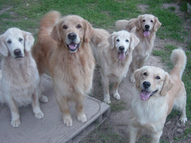 Our Goldens