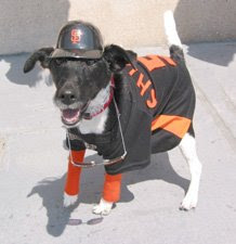 Giants Fan dog