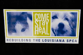 Come Stay Heal at Louisiana SPCA