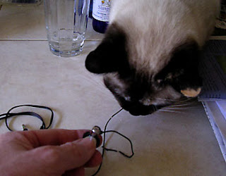 Ani Siamese enjoyed chomping on the earbuds.