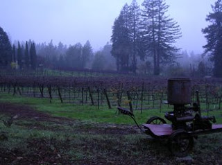Vineyard on Cherry Ridge above Sebastopol