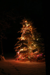 Christmas Tree with Lights in Snow