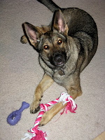 Zada with Knotted Rope Toy