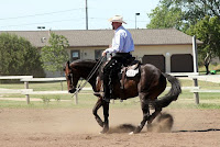 Reining Horse Spinning
