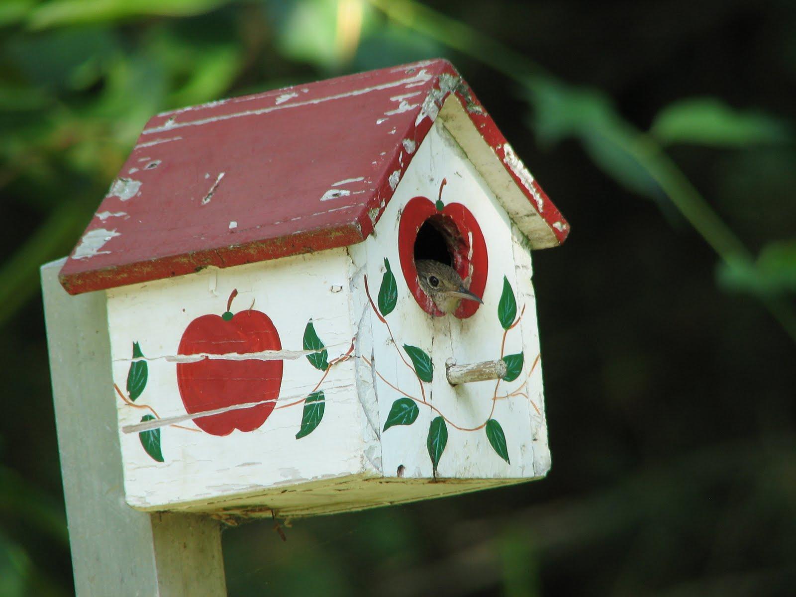 Wrens of Maryland - Los Acres Silvestres de Maryland