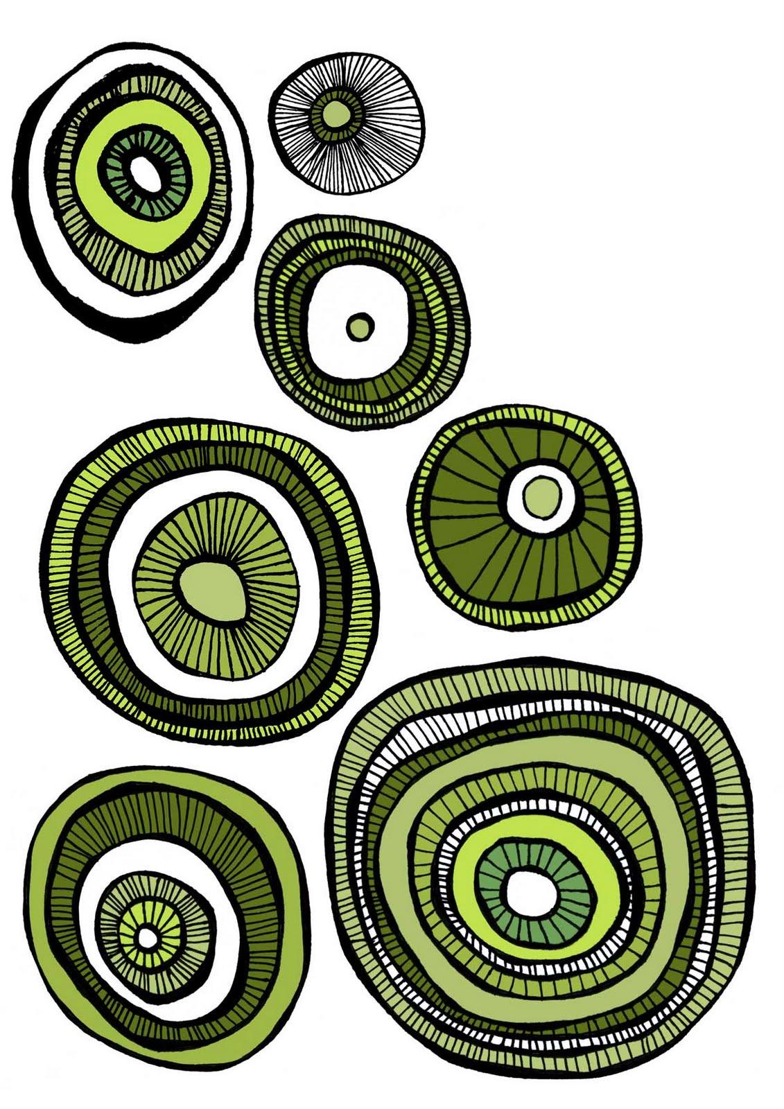 Kiwi Fruit Drawing Kiwi Fruits