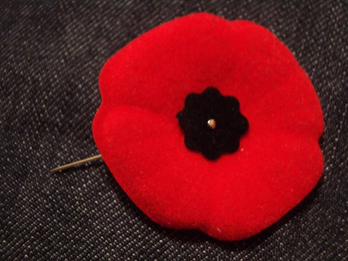 Phyllys faves poppies poppies mightylinksfo
