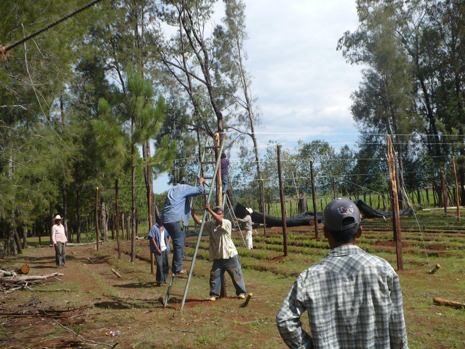 Tecno asesores estructura del vivero forestal for Vivero estructura