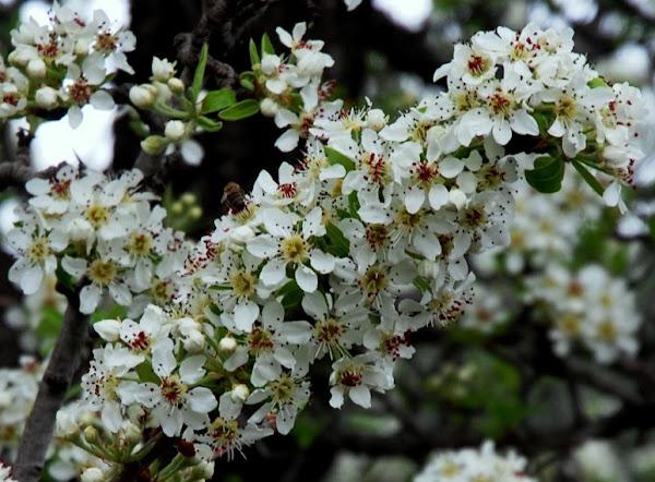 041- Bahar dalı
