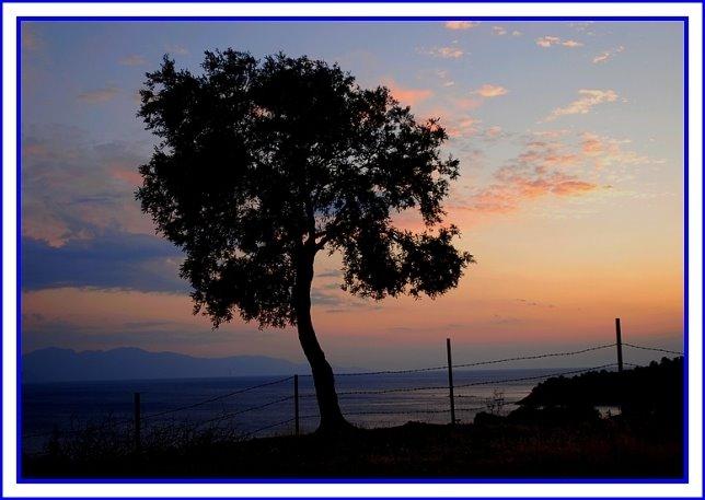 133- Tutsak ağaç