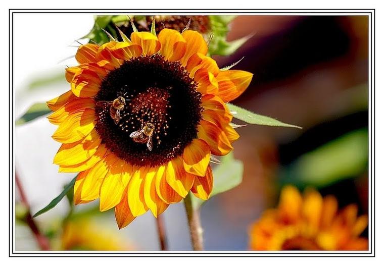 261 - Arılar iş başında